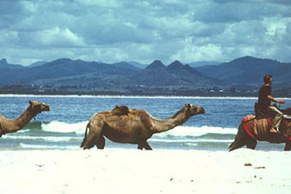 camelsF1EC2409-01AC-5FCB-2DF6-BA726ABFF01E.jpg